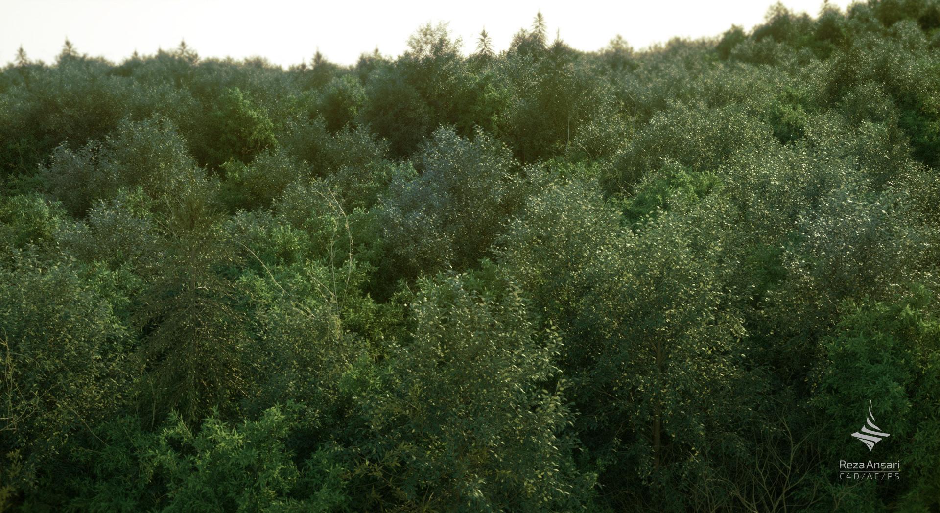 Arbor Day3